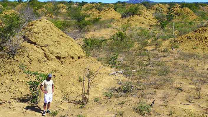 Termite mound fields in Brazil (Credit: Roy Funch)