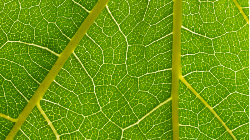 Artificial photosynthesis replicates the natural process found in leaves. Stock image. (Credit: Shutterstock)
