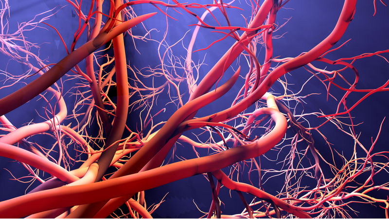 Stock image. Microvehicles could unblock blood vessels or deliver drugs to tumours (Credit: Shutterstock)