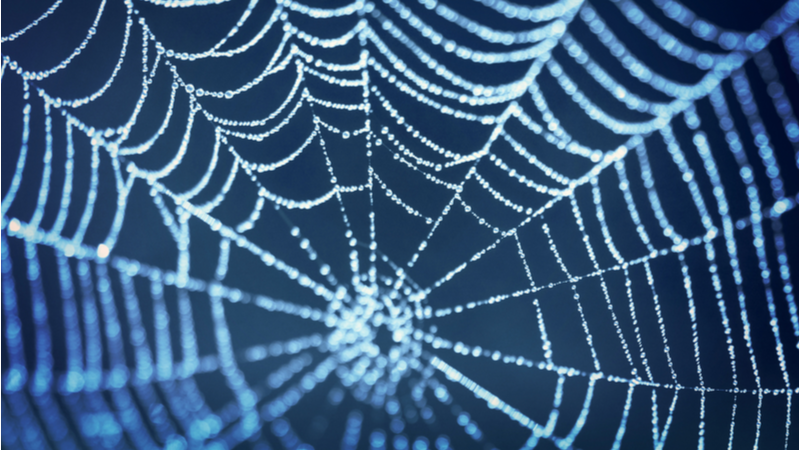 Stock image of a spider's web. The Cambridge researchers mimicked key elements of spider silk formation to create the new material (Credit: Shutterstock)