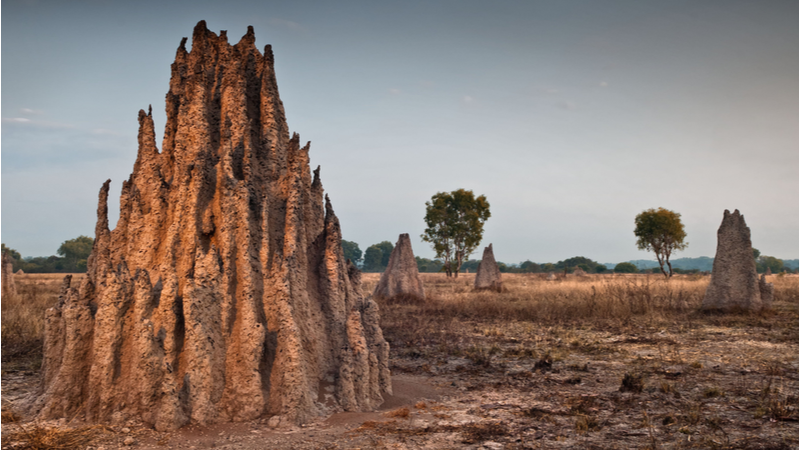 Mimicking biological designs, such as these termite mounds in Australia, can help engineers create more sustainable solutions in construction and manufacturing (Credit: Shutterstock)