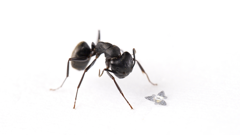 Winged microchip is smallest ever human-made flying device   Image