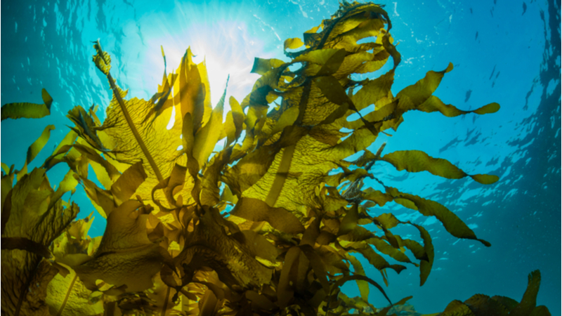 Seaweed-like generators harness wave energy to power devices Image